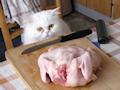 Что накрыть на стол в год кота