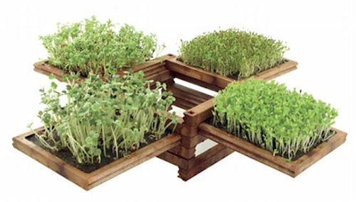 4 совета по созданию мини огорода в доме