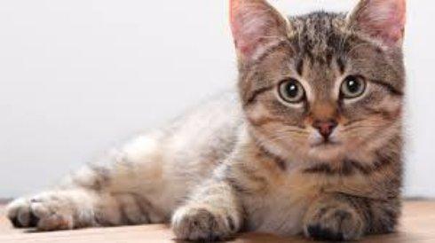 Друг мой, кошка