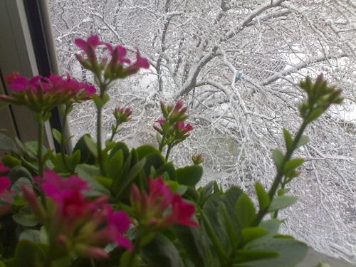 Как пережить зиму на подоконнике?