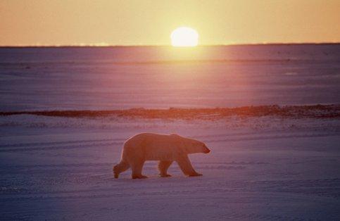 У чому реальна причина глобальної зміни клімату?